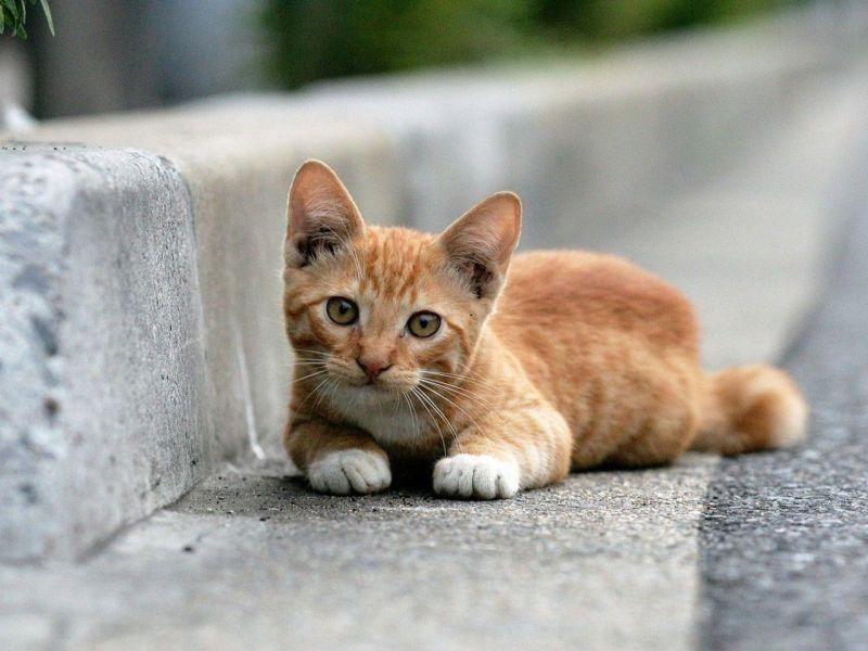 Кот у дороги