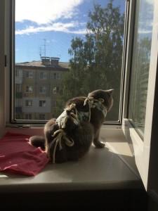 Стерилизация кошки 2