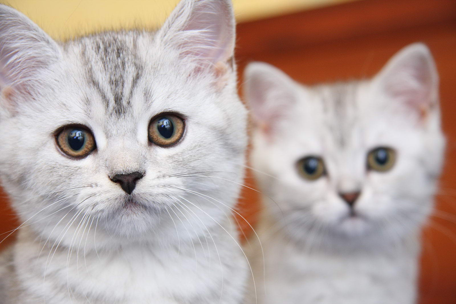 Клички кошек фото