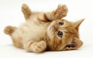 Корление котёнка 2 мес. 5