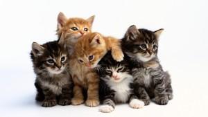 Кормление котёнка 3 мес. 2