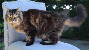 Кошки долгожители 3