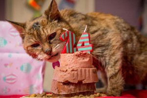 Кошки долгожители 2