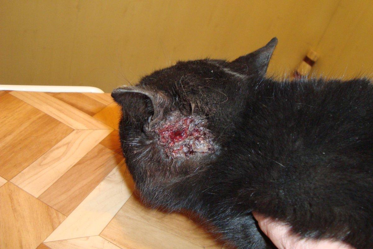 лишай у кошек фото признаки и лечение