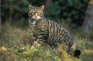 Возраст кошки 2