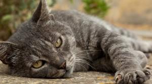 Возраст кошки 3