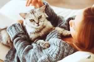 Аллергия на кошек 3