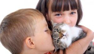 Аллергия на кошек 4