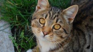 Беспородная кошка 2