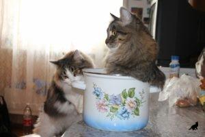 Беспородная кошка 3