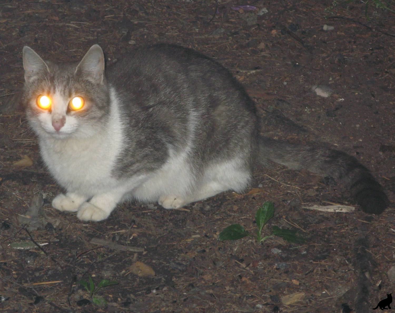 Кошачьи глаза в темноте 2