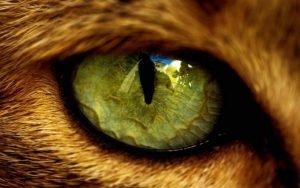 Кошачьи глаза в темноте 3