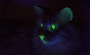 Кошачьи глаза в темноте