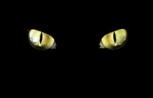 Кошачьи глаза в темноте 4