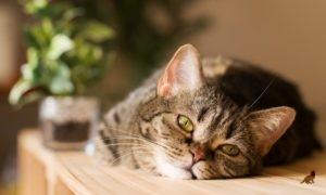 Кошки на столе 2