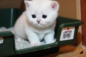 Понос у кошки 3