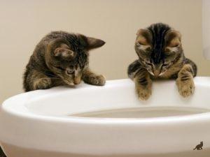 Понос у кошки 4
