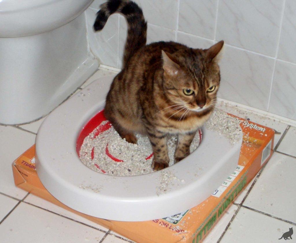 Что дать коту от поноса в домашних 37