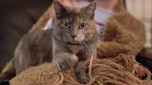 Почему кошка топчет лапками человека 2