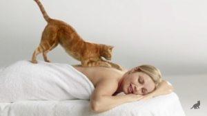Почему кошка топчет лапками человека 3