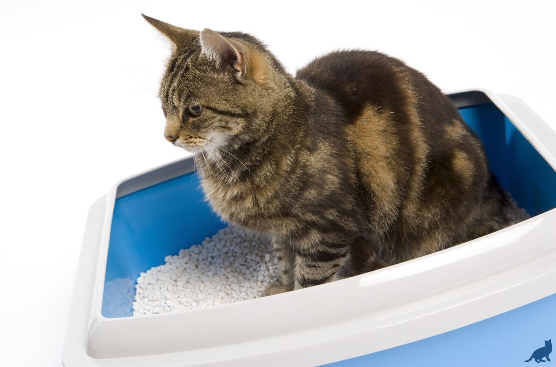 Запор у кошки 2