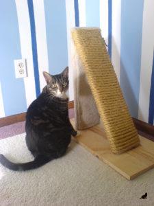 Когтеточка для кошки 2