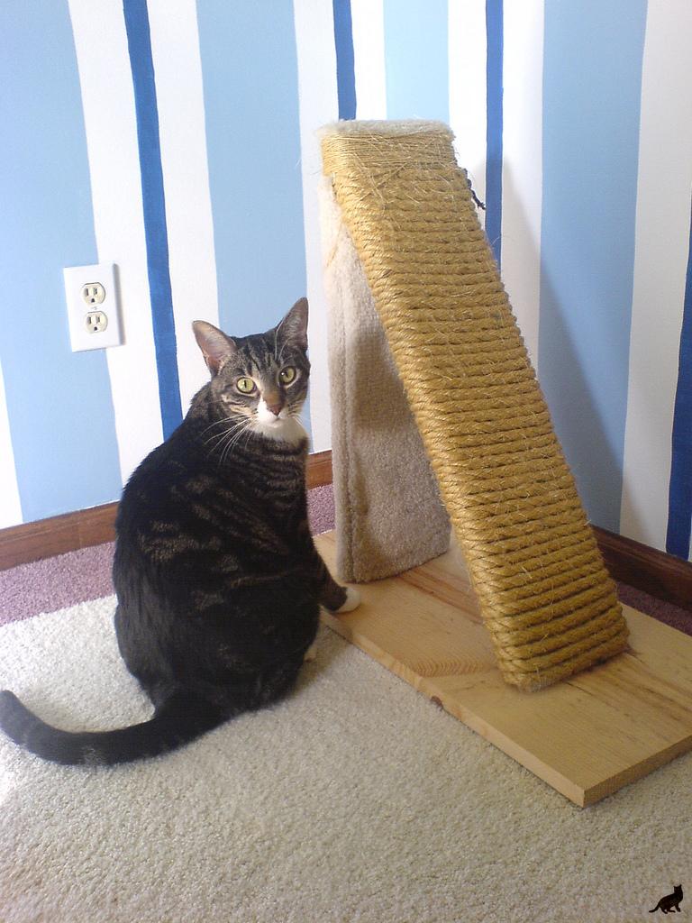 Чесалка для кошек своими руками фото пошагово
