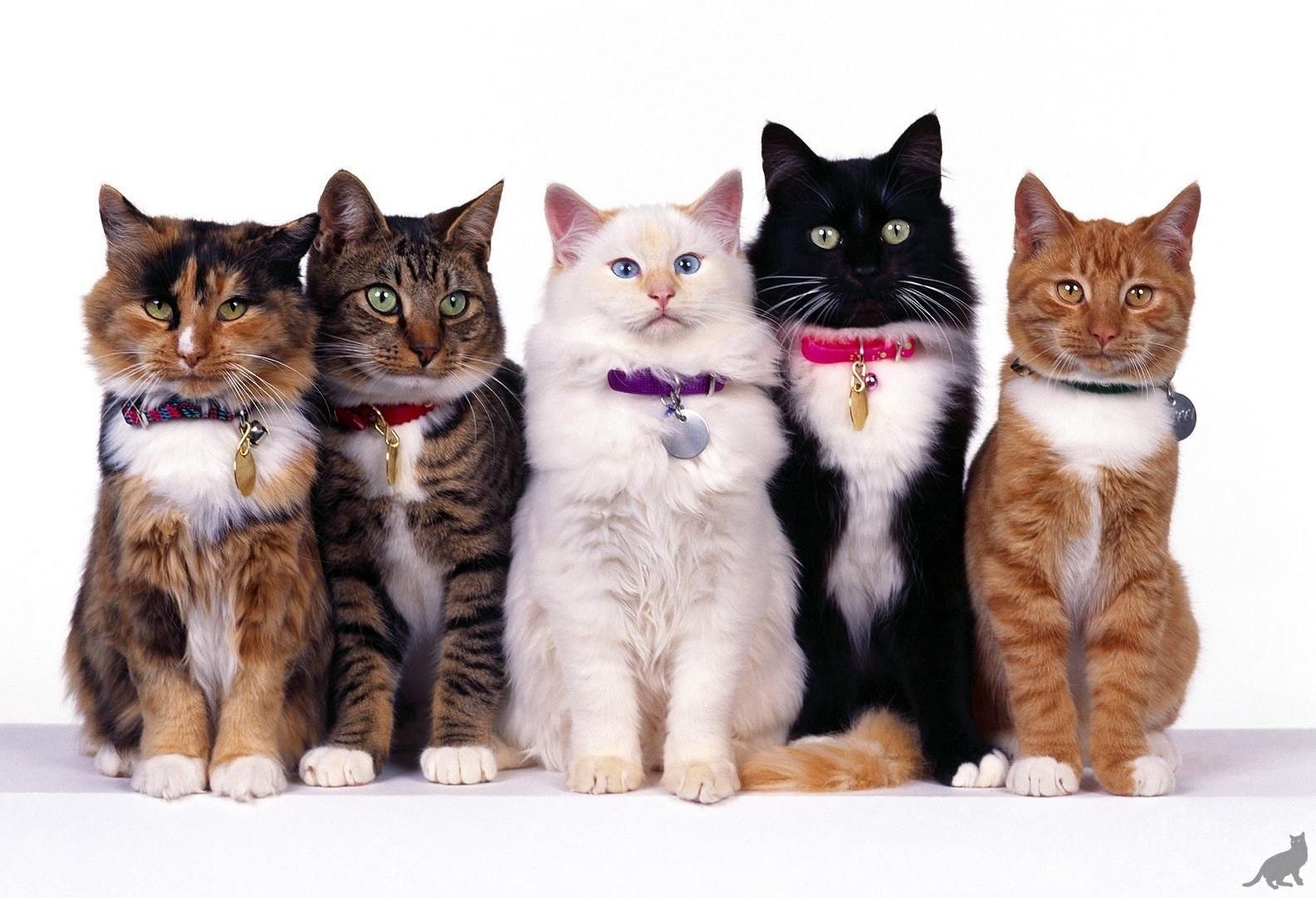Дорогие кошки