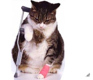 Заболевания кошки 1