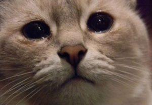 Слезы у кошки 2