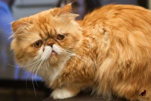 Красивые кошки 1