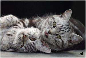Феномен кошек 1