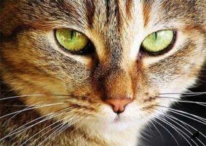 Феномен кошек 2