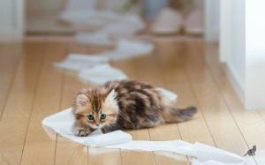 Феномен кошек 3
