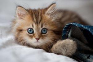 Феномен кошек 6