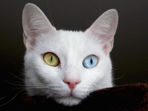 Феномен кошек