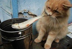 Кормление кота рыбой 1