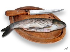 Кормление кота рыбой 2