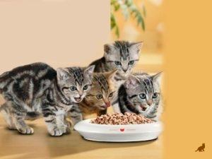 Кошка ест сухой корм 3