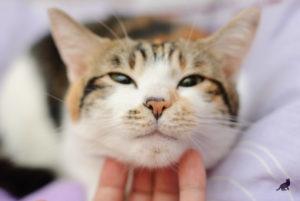 Кошка мурлыкает 1