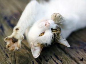 Кошка мурлыкает 2