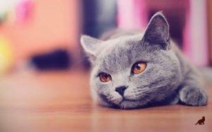 Кошка после родов 1