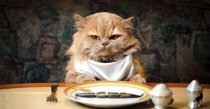 Чем кормить кошку 3