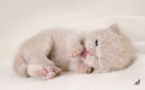 Рождение котенка 1