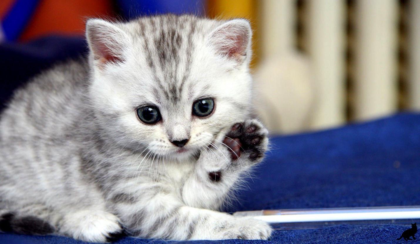 Рождение котенка