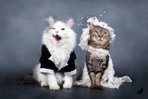 Вязка кошек 4