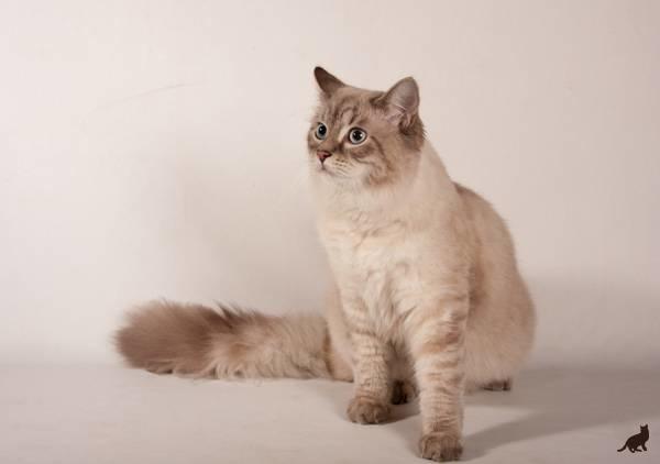 С какого возраста считается кот взрослым