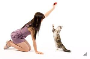 Дрессировка котов 1