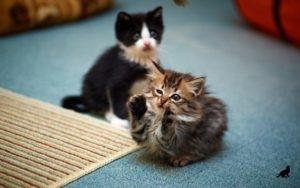 Дрессировка котов 3