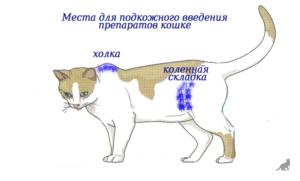 Как сделать укол кошке 2